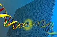 DNA through a nanopore in graphene